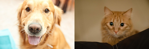 Como el perro y el gato