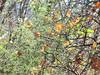 un po' di asparagine tra le foglie