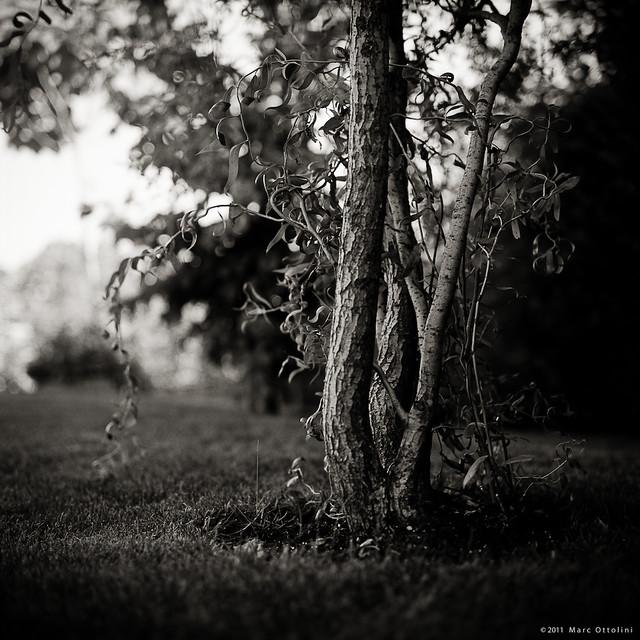 """Salix"""