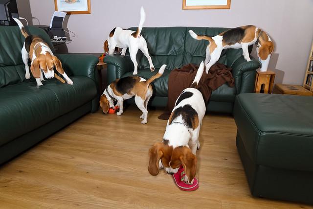Beagle Chaos Composite