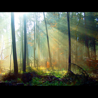 Zauber im Wald