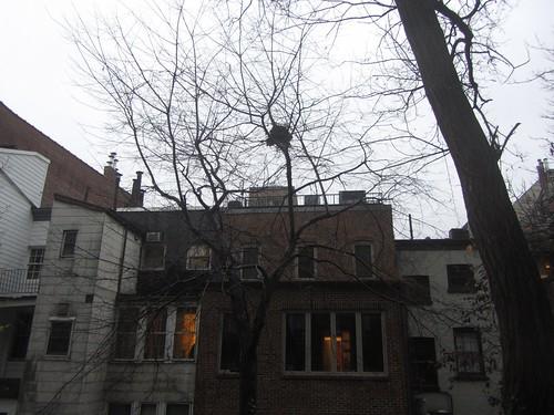squirrel renovation