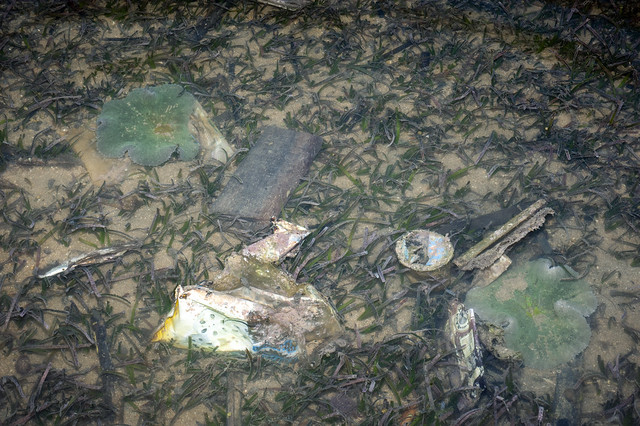 Oil-slicked Tanah Merah: Litter on the seagrasses among anemones