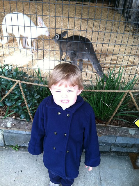 Bennett and kangaroos