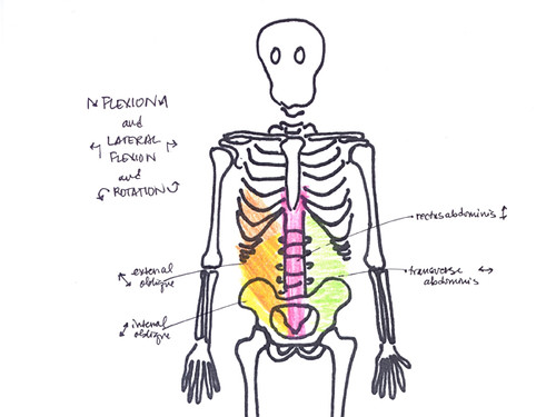 trunk flexion, lateral flexion, and rotation