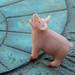 Peace Pig