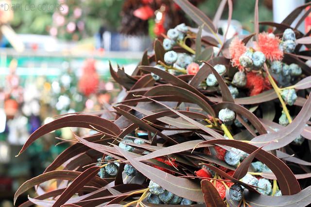 Olor a eucaliptus - Fira Santa Llúcia