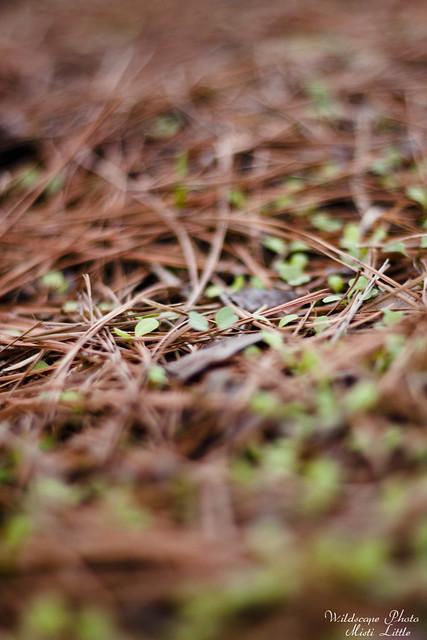 lettuceseedlings