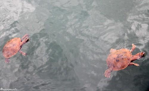 Passeio de lancha no Lago Paranoá