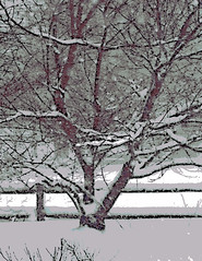 Tree and Fence in Snowstorm (Digital Woodcut) by randubnick