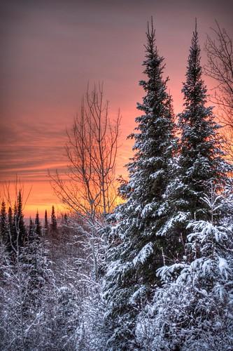 無料写真素材, 自然風景, 樹木, 朝焼け・夕焼け, 雪