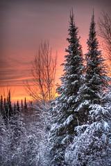 [フリー画像素材] 自然風景, 樹木, 朝焼け・夕焼け, 雪 ID:201112252000