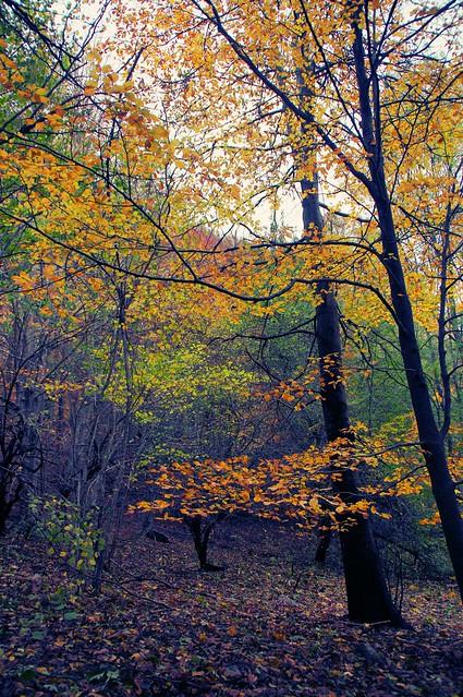 Los árboles del oro
