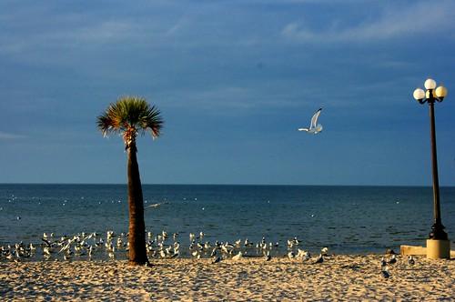 sky beach gulfofmexico florida springhill palmtrees waterfowl waterscape pineislandbeach