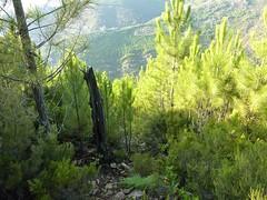 Punta Radichella par la sente de chasseurs : la sente vers le bas dans le haut du versant