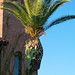 OMG, cactus growing on palm tree!