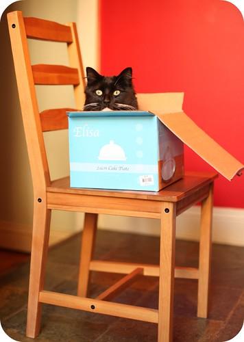 Monty in a Box 1