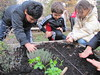 Ricominciamo a coltivare nelle scuole 35