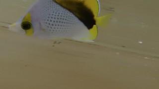 007 Declevis Butterflies - Marshall Islands