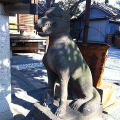 お飾りのお焚き上げへのお納めと 狛犬探訪