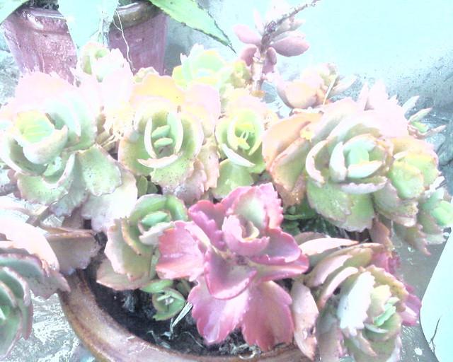Plante d 39 int rieur flickr photo sharing - Plantes interieur depolluante ...