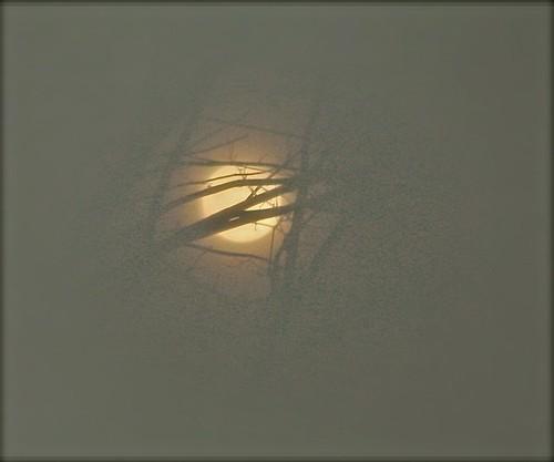Wolf Moon 04