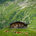 Austrian mountain farm in the high summer pastures
