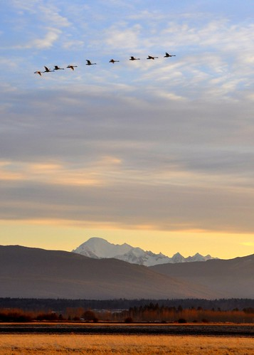 01-13-12 Mount Baker Morning by roswellsgirl