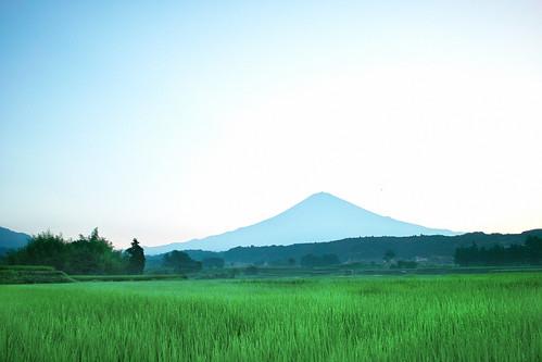 summer sky green bird nature japan sunrise landscape sigma fujisan 富士山 静岡 dp1x