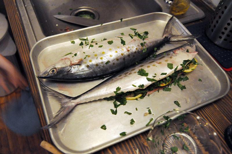 the mackerel