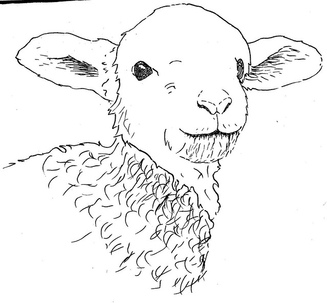 Lamb drawing | Flickr - Photo Sharing!