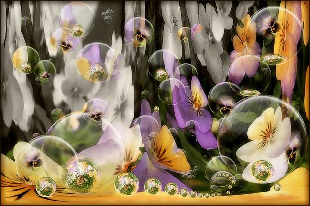 Colour My Garden