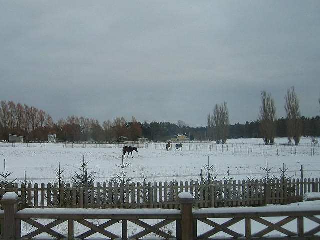 Viking Land, Horse, Winter 003