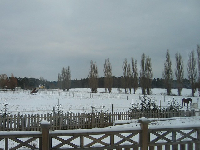 Viking Land, Horse, Winter 006