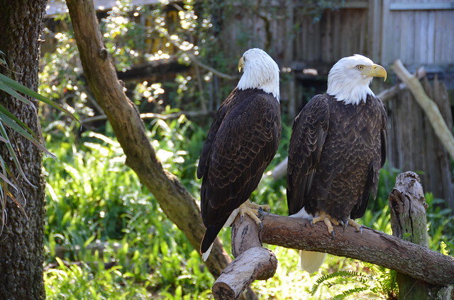 Lowry Park Zoo 1-29-12 008