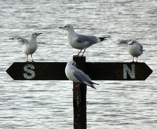 gulls on sign