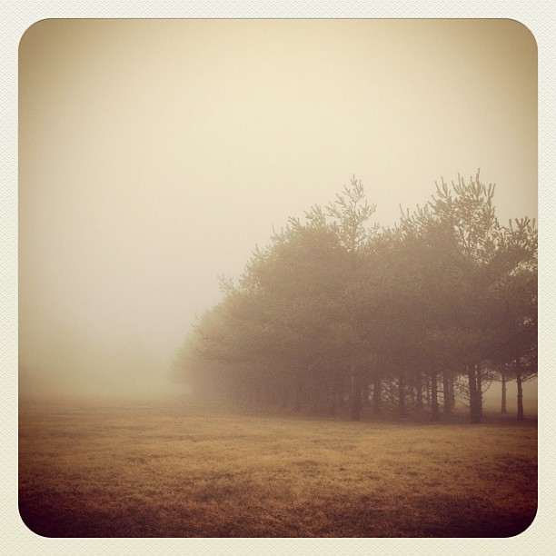 Foggy Morning #fog