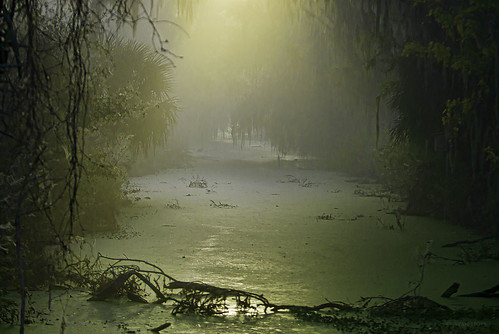 park morning light usa nature water landscape nikon florida wildlife swamp topaz lakelandflorida cbbr d7000 circlebbarreserve nikssoftware