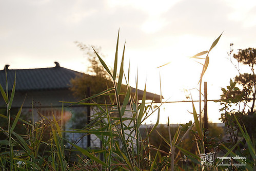 M.Zuiko_1250_32.jpg