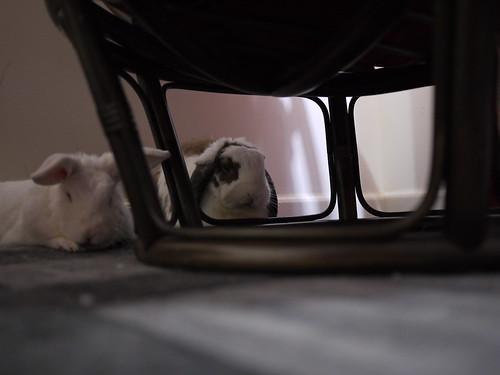 betsy peering