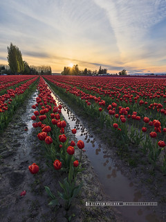 Skagit Valley Sundown