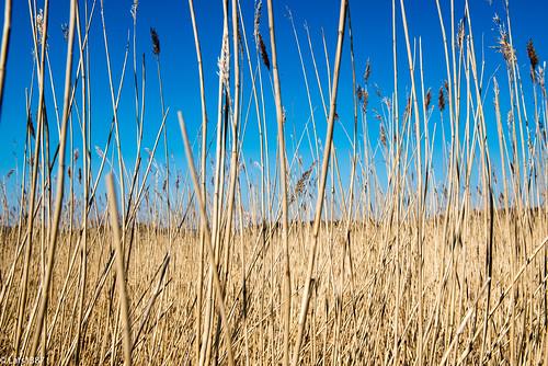 sky nature norway nikon april vestfold d800e