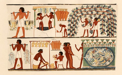 020-Los viticultores recogen y preparan la uva- The tomb of Nakht at Thebes  1917- Norman de Garis Davies- © Universitätsbibliothek Heidelberg
