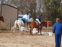 E and Silver, K and Calliope, S and Dunny: trio jumping... almost