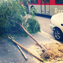 Santa ana winds are drama. Trees down, power out! #la meltdown
