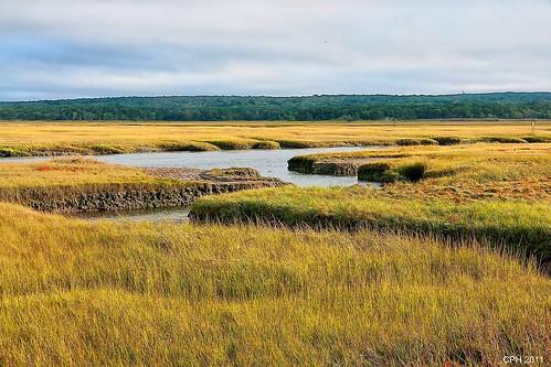 ma massachusetts newengland sandwich wetlands boardwalk marshland photostream millcreek 308 2011 capecodbay sonydslra700 zeiss16803545 houckster