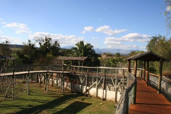 Cango Wildlife Ranch 4