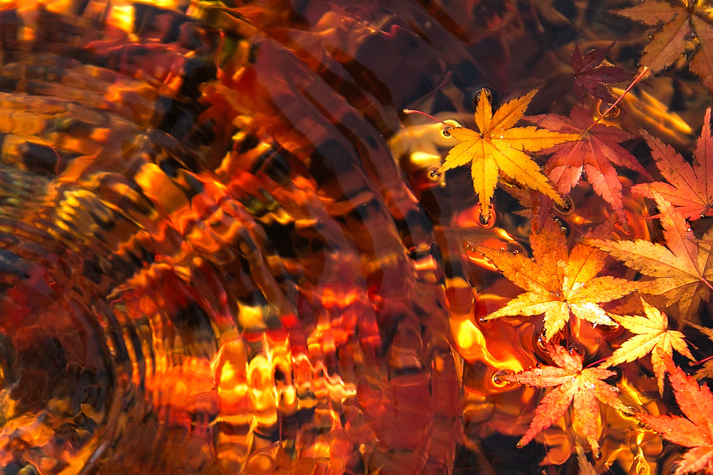 Floating Autumn