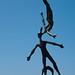 Small photo of Acrobatics
