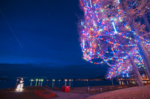 Tree at English Bay by petetaylor